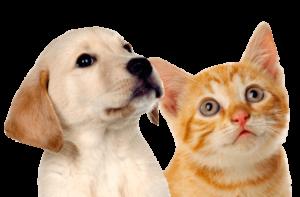 חתול וגור כלבים מסתכלים על טופס יצירת קשר