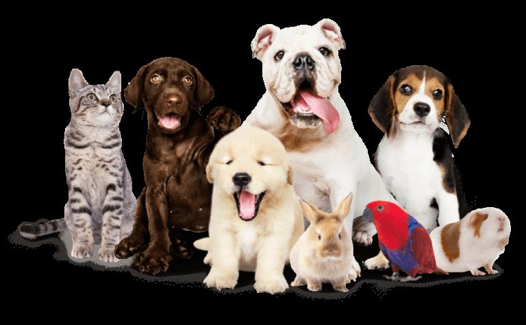 כלבים, חתול, ארנב, שרקן ותוכי עומדים יחד