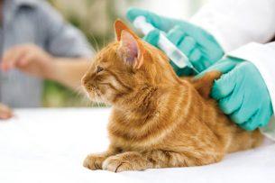 חיסון לחתול - וטרינר בחיפה
