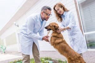 2 וטרינרים מחזיקים כלב בחצר