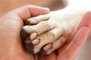 יד רופא מחזיקה כף רגל של כלב - ליאורה וולדמן